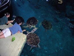 Picture of EZ Dock in and indoor Aquarium