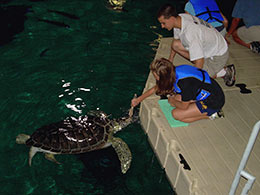 turtle-feeding-for-gallery